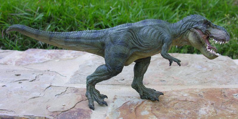 aspergers teen, aspergers girl, aspergers blog, aspergers syndrome, asd, best aspergers blog, top aspergers blog, aspergers, teen girl, papo, tyrannosaurus, tyrannosaurus rex, dinosaur, papo dinosaur, sue