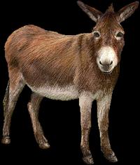 Donkey 07